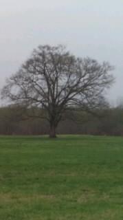 この〜木なんの木、気になる木〜♪
