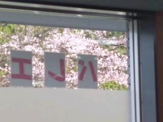 花見しながらレッスン〜♪やっとサクラが咲きました〜!!