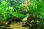 小さな大自然水槽01